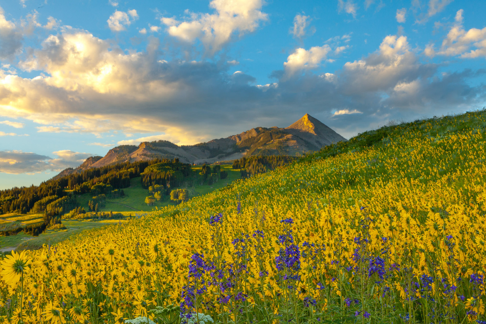 Butte-i-ful Wildlfowers