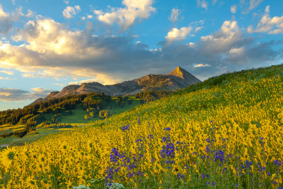 Mt Crested Butte Wildflowers
