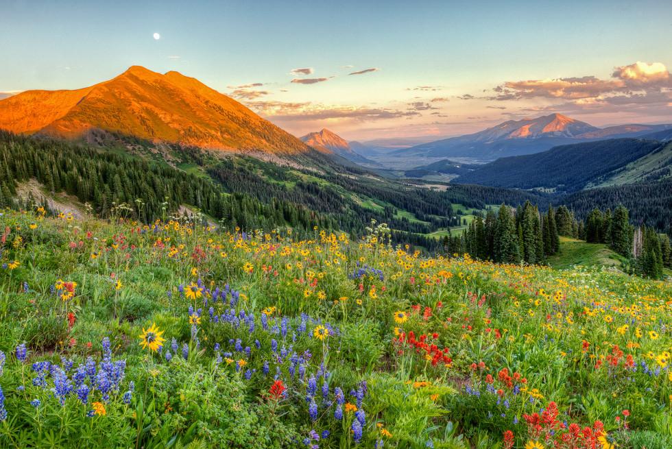 Wildflower Moonrise