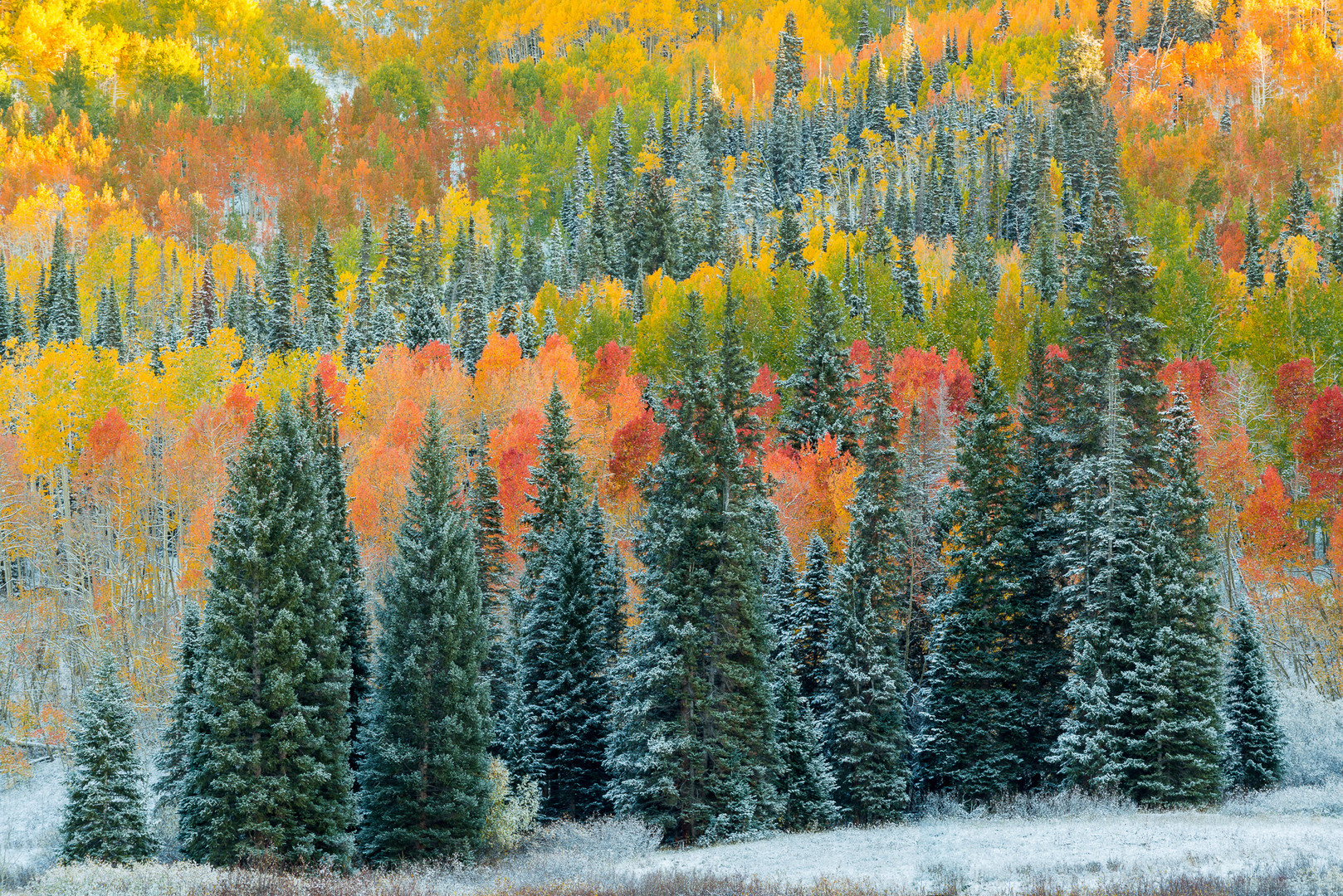 Christmas_Trees_orig.jpg