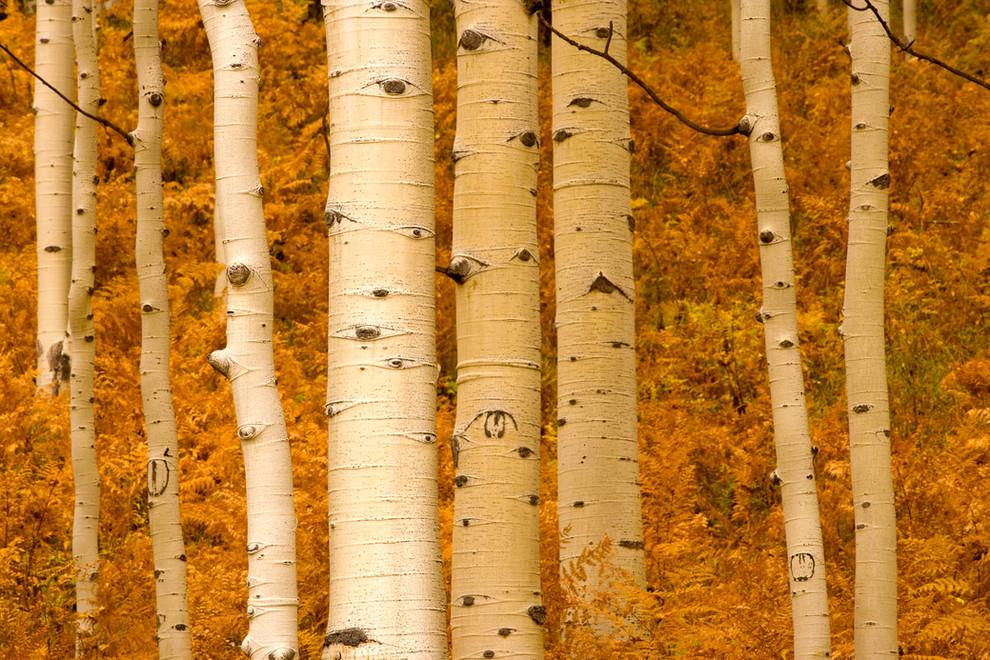 fern_woods.jpg