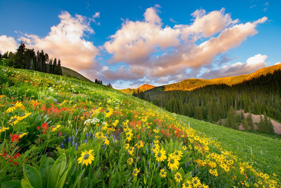 West Maroon Wildflowers