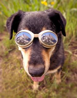 Dogglevision
