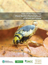 Dytiscidae atlas.jpg
