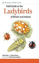 Ladybirds bloomsbury.jpg