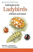 Ladybirds bloomsbury.jpg