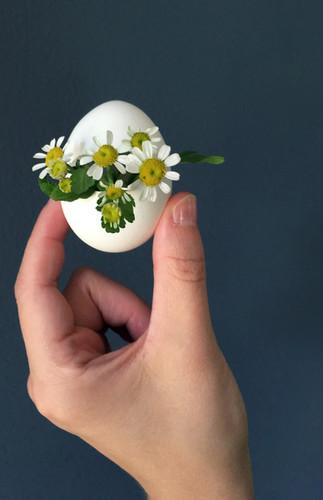 Eggette