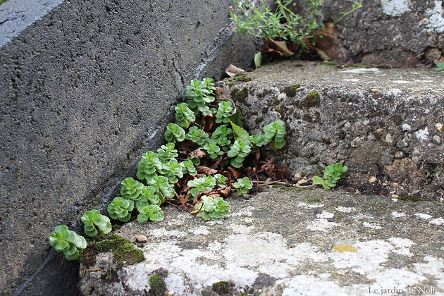 Rocaille de l\'escalier de la terrasse | Fête des mères | Le petit ...