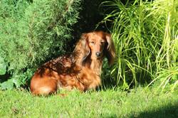 Nitka w swoim ogrodzie