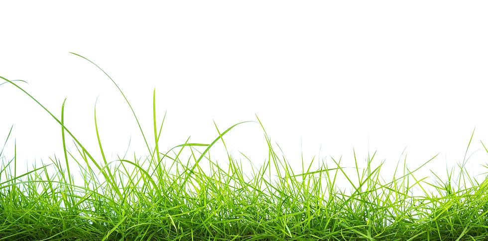 green-grass-white-background.jpg