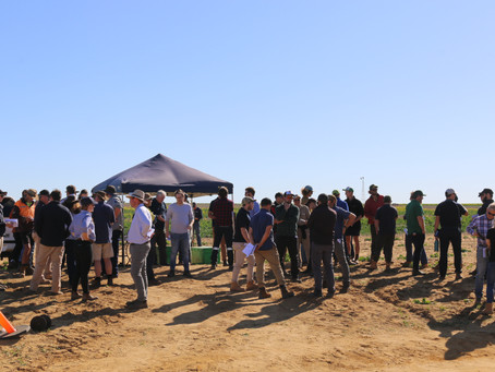 Record breaking field walk for Liebe Group