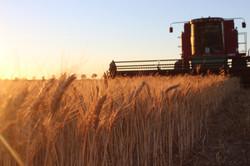Liebe Harvest