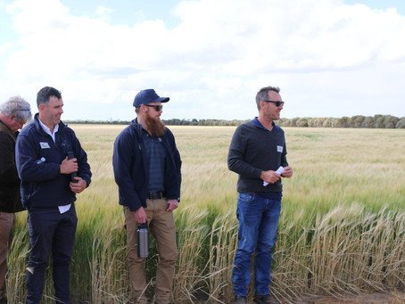 AgChats: Addressing the environment, soil health and economics of Wheatbelt farms