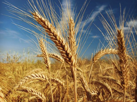 Survey shines spotlight on micronutrients