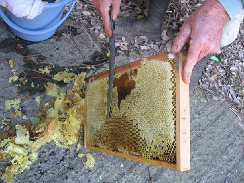 蜜蓋を切る.png