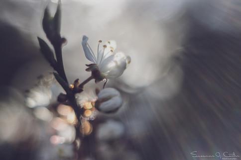 Vårglädje