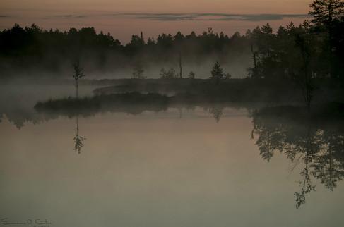 Rofylld morgon