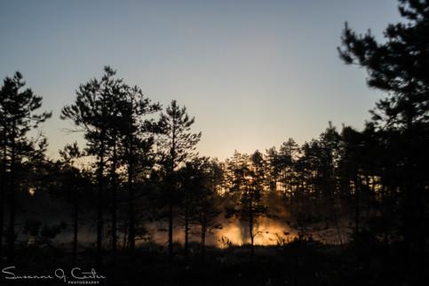 Förgylld morgon