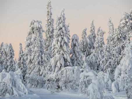 Vinter, kyla och snö