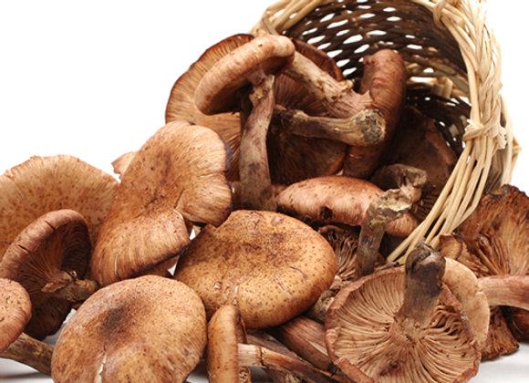 Mushroom Lover's EVOO