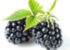Blackberry Organic Balsamic Vinegar
