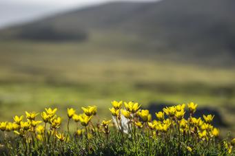 Blomster FOTO SIgurd Gautun / Natur og Ungdom