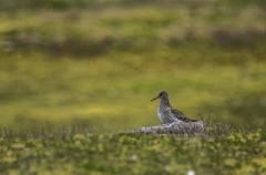 Fugel FOTO Sigurd Gautun / Natur og Ungdom