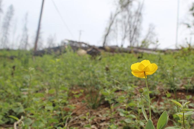 paradise-flower-02.JPG