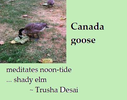 Haiku by Trusha Desai