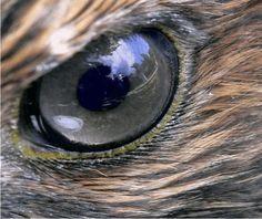 Hawk's Eyes
