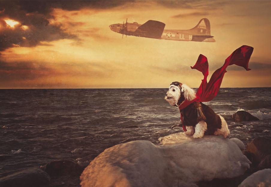 WWII Flying Dog