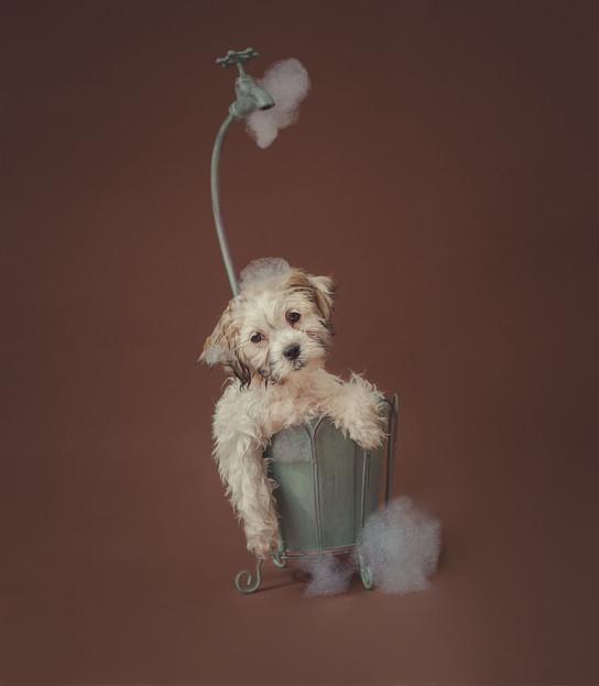 The Puppy Wash