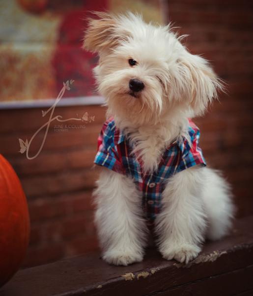 A Cute Rescue Puppy