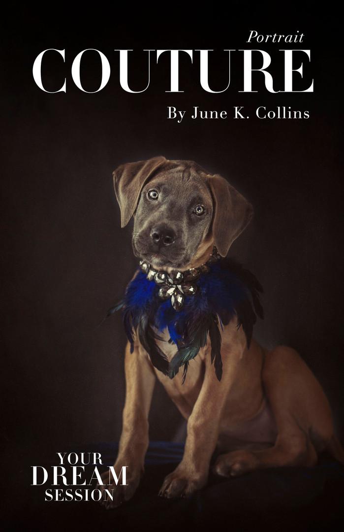 June K. Collins Portraits Guide