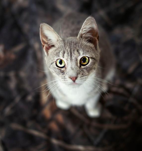Kitty Sanction