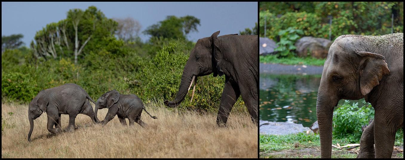 ElephantDiptych.jpg