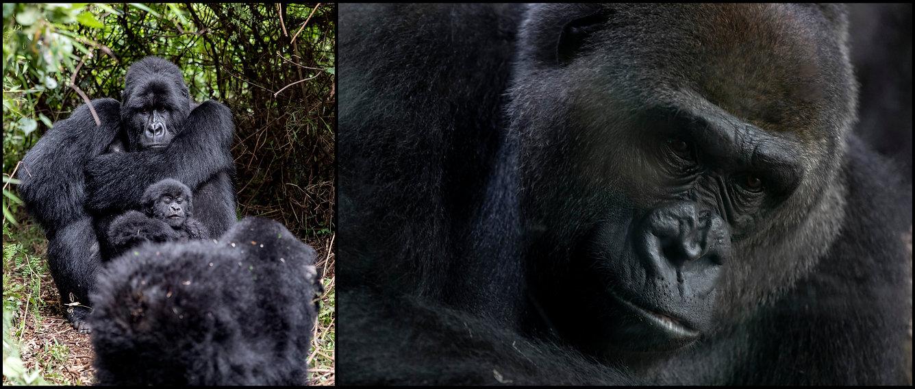 Gorilla1_Diptych.jpg