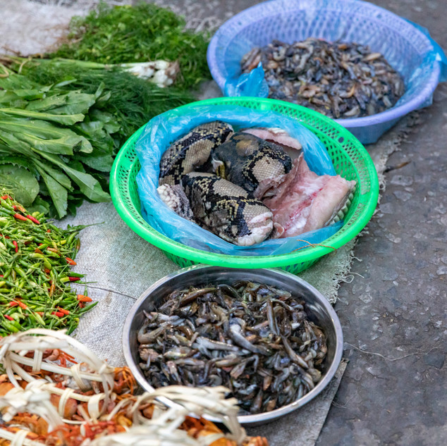 Foods such as snake, fish and vegetables rest on a tarp in the midst of a morning market in Luang Prabang, Laos. Delicacies are unusal to those in the Western world but a feast over in Asia.