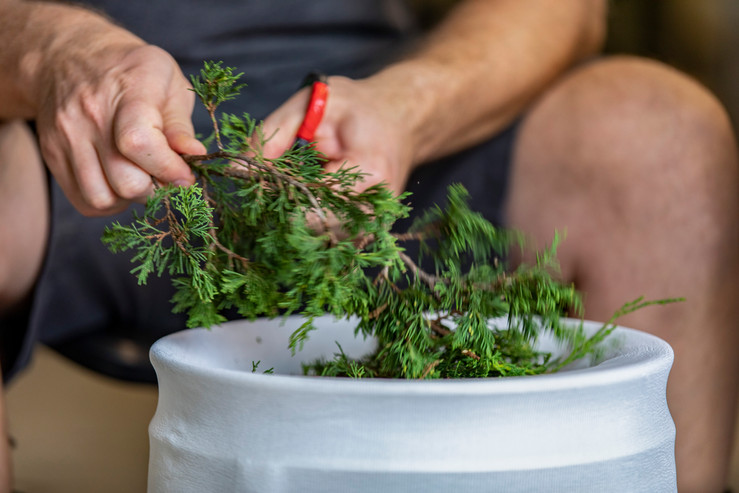 Sean White cuts juniper branches to experiment brewing it in some of their house-made beers in the back room of Little Fish Brewing Company in Athens, Ohio on October 10, 2018.