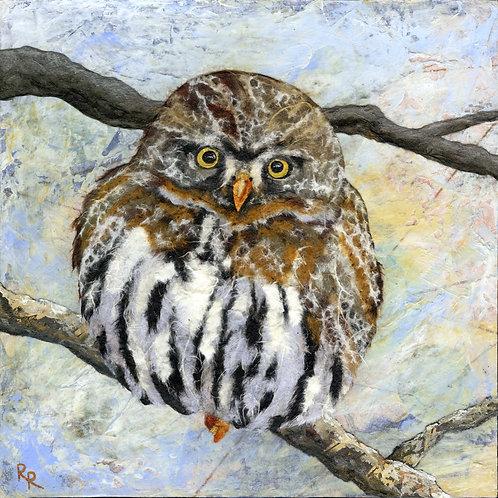 """""""Pygmy Owl"""""""