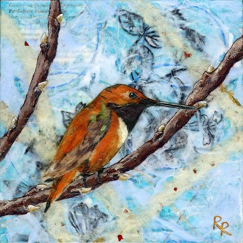"""""""Allen's Hummingbird"""""""