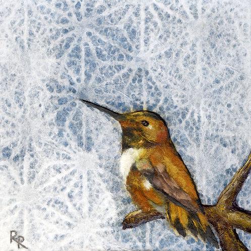 """Male Hummingbird"""