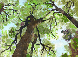Back to the Earth - Oaks Above