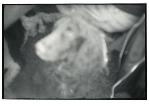nicholas (28).jpg