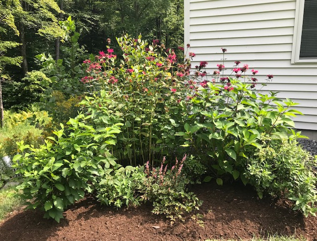 Perennial Flower Bed