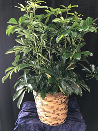 Small Plant #822