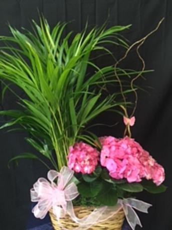 Double Plant Basket #818