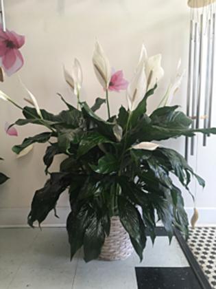 Large Plant #821
