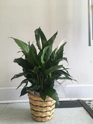 Small Plant #820