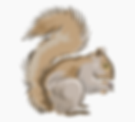 12-128809_squirrel-with-his-mouth-full-o